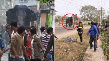 Słoń zdemolował miasto w Indiach