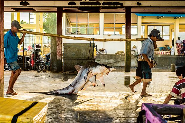 Sprzedaż rekinów natargu TanjungLuar