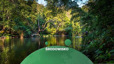 Las tropikalny - zdjęcie ilustracyjne