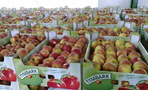 Tymbark podczas akcji rozdał 80 ton jabłek