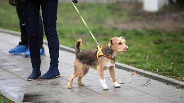 Ministerstwo Finansów rezygnuje z pomysłu podwyżki VAT-u na leki dla zwierząt