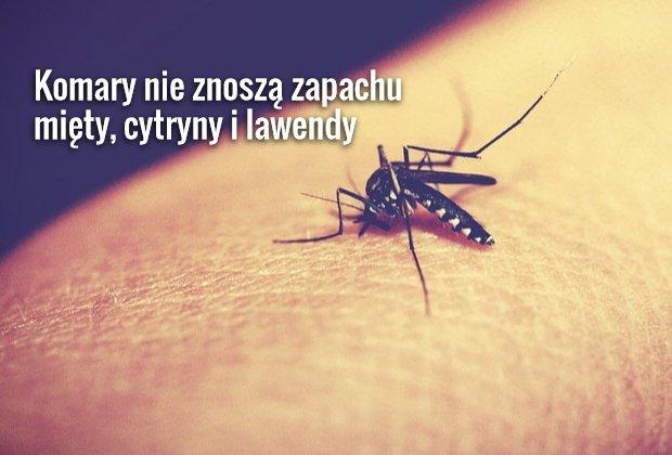 Naturalne środki odstraszające komary
