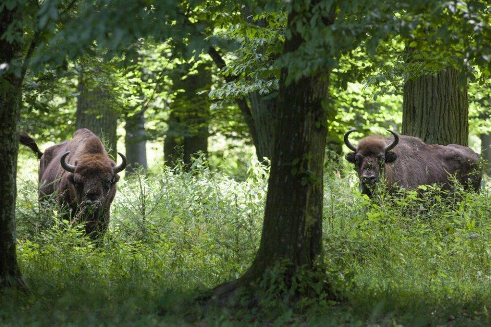 Podlaska część filmu powstawała w białowieskim i biebrzańskim parku