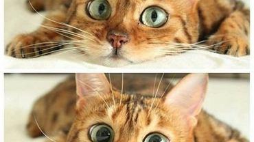 Wszystkim kotom małym i dużym życzymy dużo snu, dużo jedzenia i złapania słynnej czerwonej kropki!