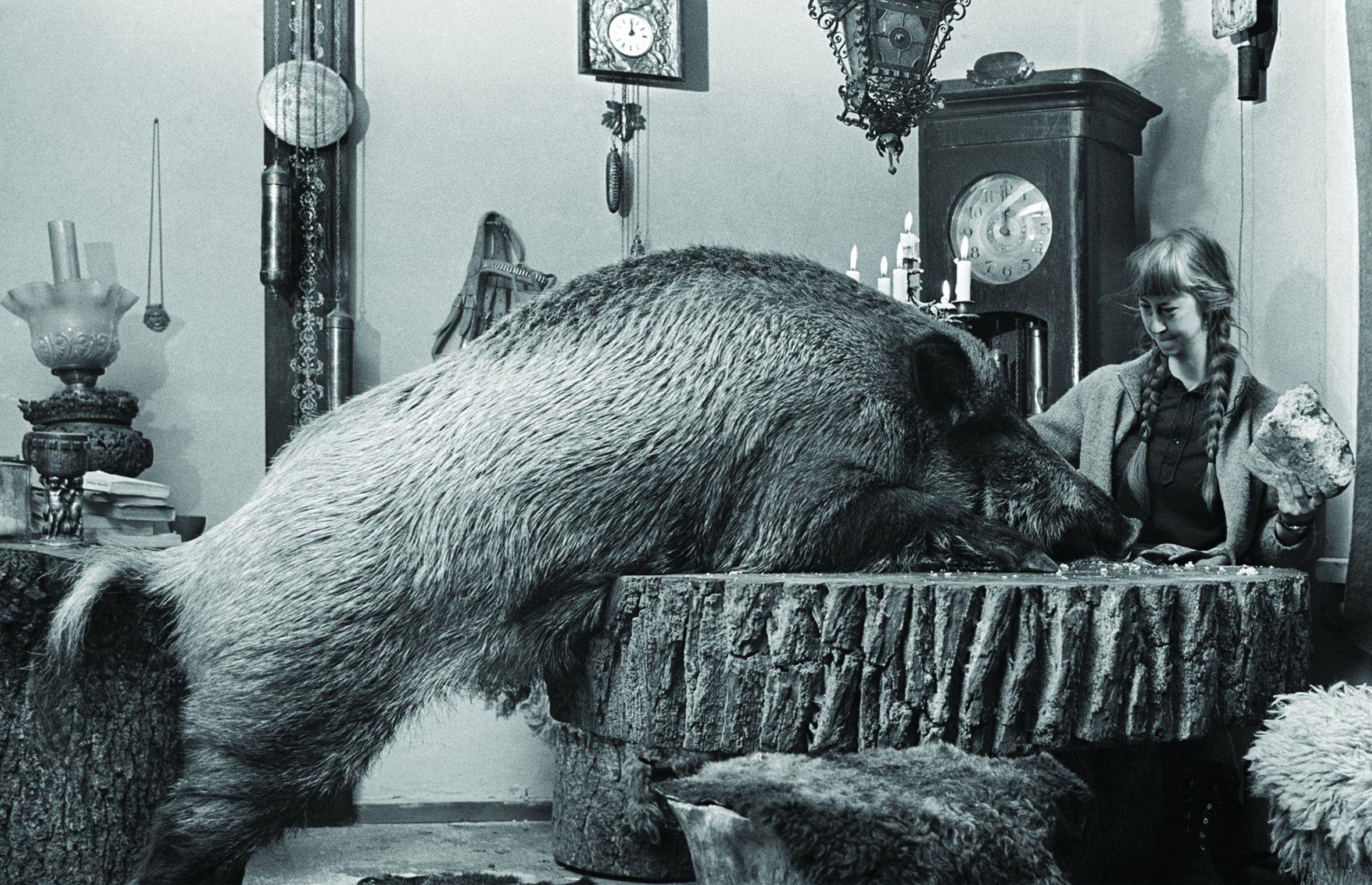 Wspólny posiłek w towarzystwie szczególnego domownika, Simona z lochą Żabką (fot. Lech Wilczek)