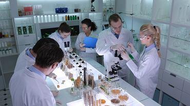 Polscy naukowcy wydrukowali w technice 3D bioniczną trzustkę