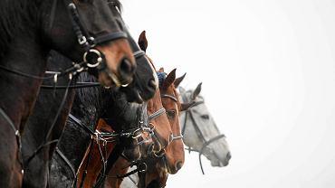 Konie (zdjęcie ilustracyjne)