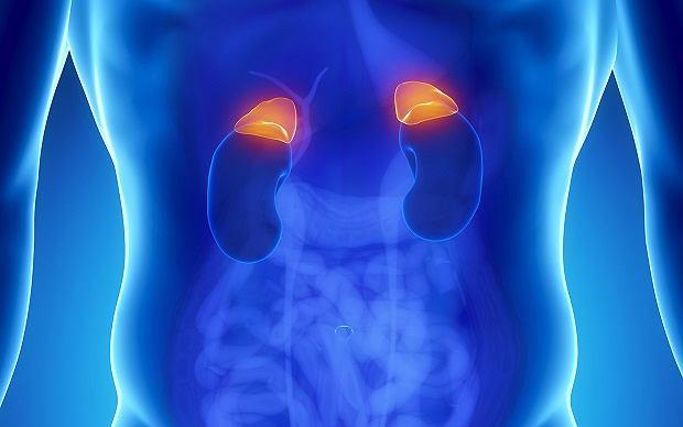 Nadnercza - mała, lecz ważna fabryka hormonów. Budowa, funkcje i choroby nadnerczy