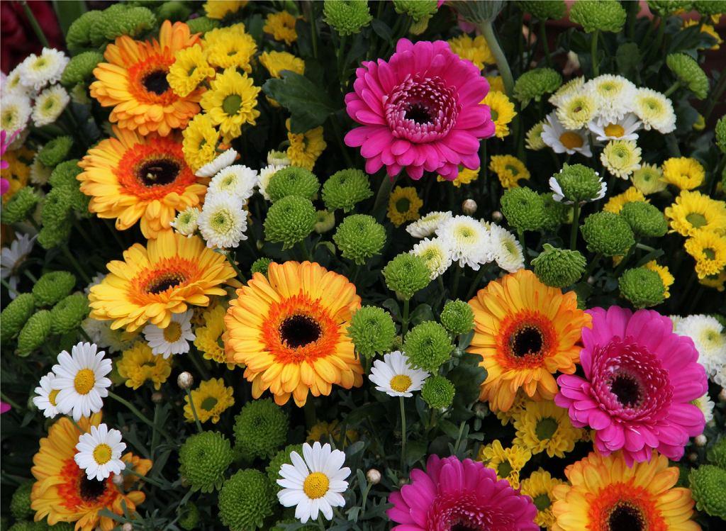 Kompozycja z żywych kwiatów zamiast wiązanki na Wszystkich Świętych. Zdjęcie ilustracyjne
