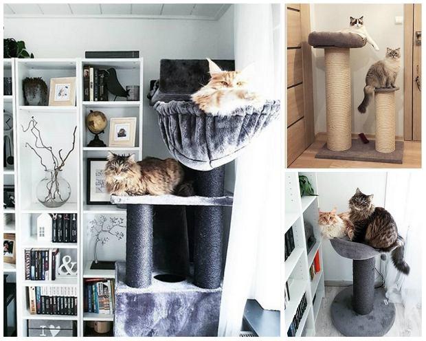 Drapak dla kota - jak wybrać? Przegląd modeli