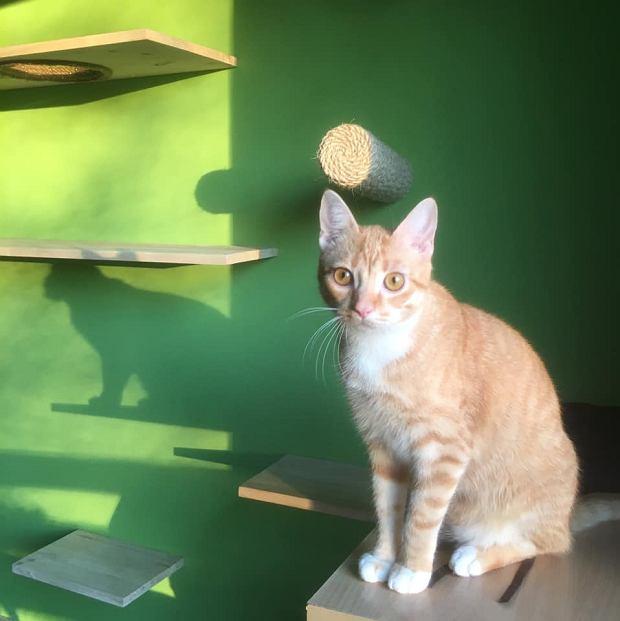 Zdjęcie numer 45 w galerii - Karmel, Daktyl, Kapitan Benny, Ptyś, Wiesław... Kochane i piękne - oto Wasze koty [GALERIA NA DZIEŃ KOTA]