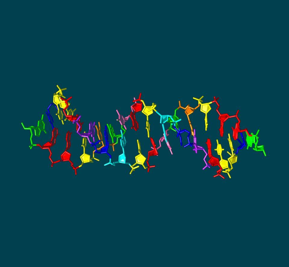 Sztuczne hachimoji DNA - złożone z ośmiu ogniw. Do czterech zasad występujących w naturalnym DNA (na rysunku zaznaczone na: zielono, czerwono, niebiesko, żółto), naukowcy dodali cztery nowe (cyjan, różowy, fioletowy, pomarańczowy)