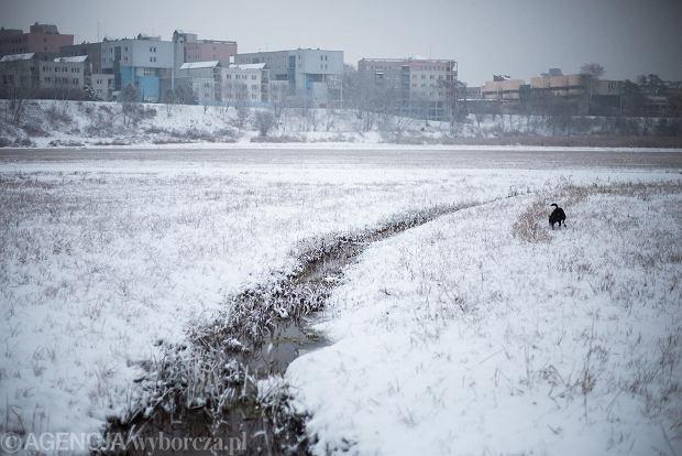 Zdjęcie numer 38 w galerii - Zima w Krakowie - śnieg przykrył ulice, domy, parki [GALERIA]