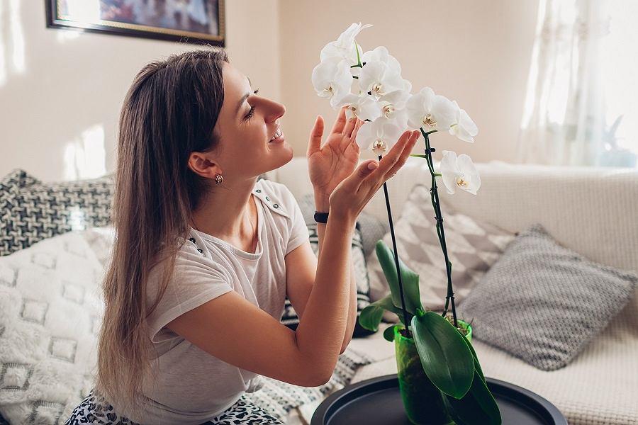 Piękny storczyk w mieszkaniu
