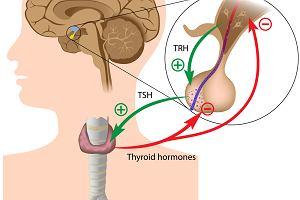 Najpopularniejsze hormony - działanie i niedobory