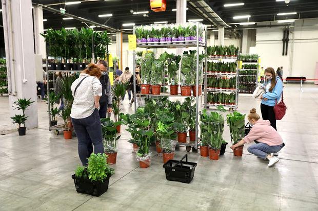 Zdjęcie numer 0 w galerii - Zazieleniły się targi w ten weekend. Trwa Festiwal Roślin i ich wyprzedaż. Zobacz, co można tam kupić  [ZDJĘCIA]