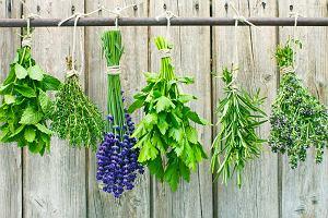 Jak odstraszyć kleszcze w ogrodzie? Posadź te rośliny