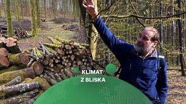 Krótka historia wycinania lasów. Na zdjęciu prof. Jan Holeksa