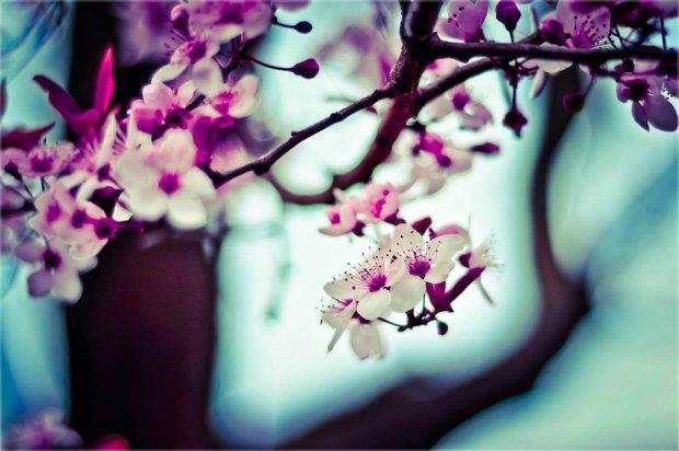 Wiosno, przybywaj! (fot. Pexels.com CC0)
