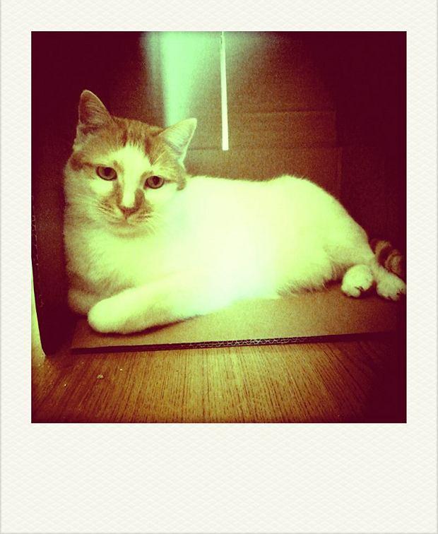Zdjęcie numer 43 w galerii - Karmel, Daktyl, Kapitan Benny, Ptyś, Wiesław... Kochane i piękne - oto Wasze koty [GALERIA NA DZIEŃ KOTA]