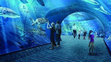 Nowe wizualizacje oceanarium, które ma powstać w sąsiedztwie stadionu w Gdańsku (wrzesień 2017 r.)