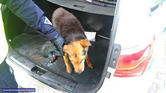 Policjanci uratowali topiącego się psa