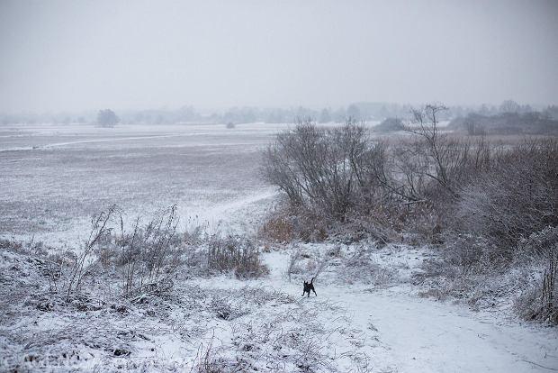 Zdjęcie numer 36 w galerii - Zima w Krakowie - śnieg przykrył ulice, domy, parki [GALERIA]