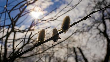 Wiosna w Ogrodzie Botanicznym w Bydgoszczy