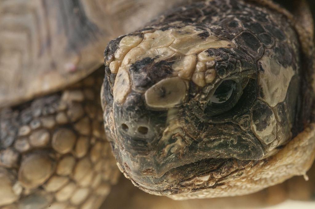 Żółwie to zwierzęta długowieczne, zostaną naszymi przyjaciółmi na wiele lat.