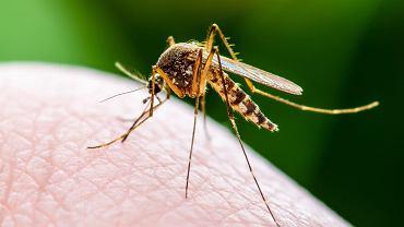 Masz dość komarów? Pomoże ci popularna przyprawa. Jest tania i działa jak niewidzialna moskitiera