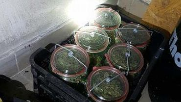 Słoiki z marihuaną ukryte w piwnicy