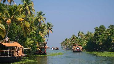 Kerala, Indie. Kerala to kraina Wzgórz Kardamonowych i herbacianych krzewów.