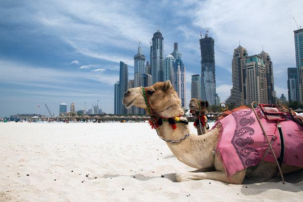 Zjednoczone Emiraty Arabskie - 10 rzeczy, które warto wiedzieć o ZEA