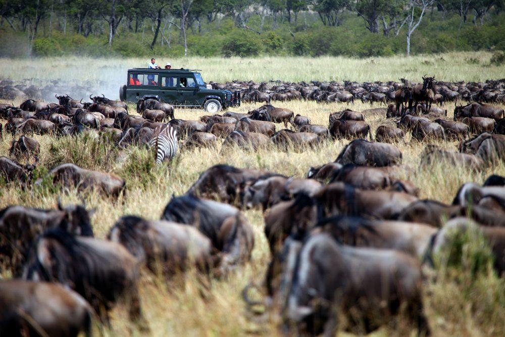 Safari w Kenii. Kenia, Afryka / fot. Shutterstock