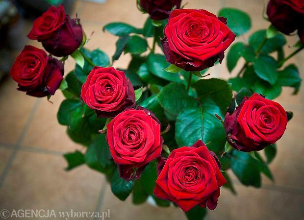 07.03.2011  BIALYSTOK , KWIATY NA DZIEN KOBIET W KWIACIARNIA ROZA NA WARSZAWSKIEJ . FOT . AGNIESZKA SADOWSKA / AGENCJA GAZETA  SLOWA KLUCZOWE: KWIAT KWIACIARNIA roze, kwiaty