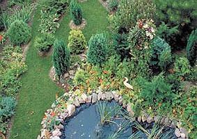 Lipiec - przesadzamy rośliny okrywowe, projektujemy oczko wodne