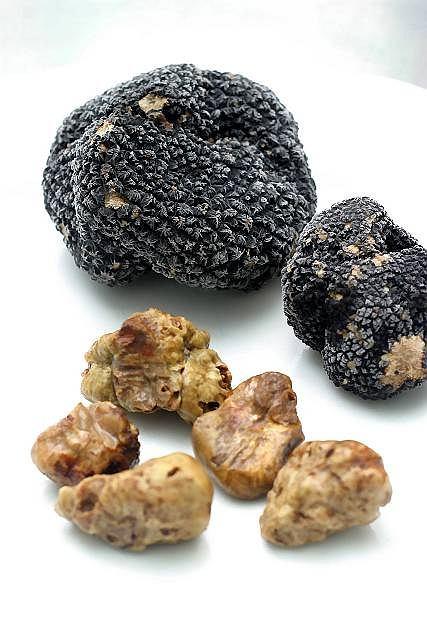 Trufle, szczególnie biała odmiana, są wyjątkowo cenione przez smakoszy