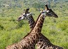 Kenia - autentyczny Czarny Ląd, dziki i zaskakujący.
