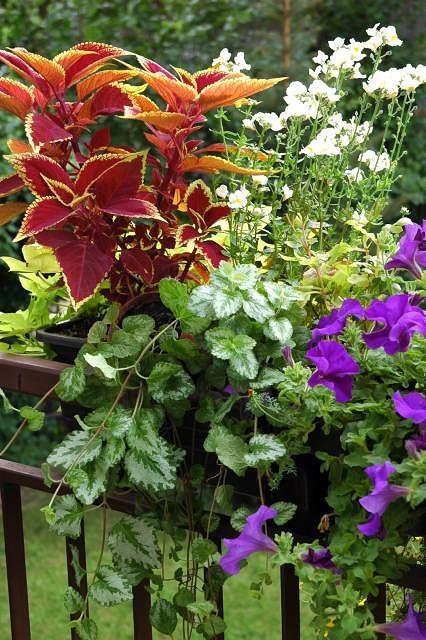 Leczymy kwiaty balkonowe - gdy w skrzynkach źle się dzieje
