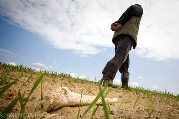 Odkrycie mogiły z okresu Potopu na polu k. Bielska Podlaskiego