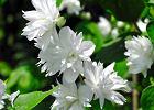 Suszone kwiaty nie tylko do wazonu. Domowe SPA i apteczka.
