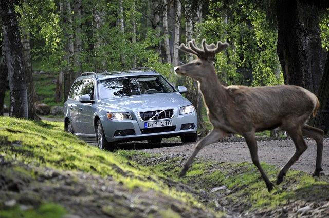 System zapobiegający kolizjom ze zwierzyną leśną