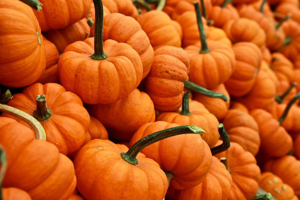 Czy 29 września to niedziela handlowa? (zdjęcie ilustracyjne)