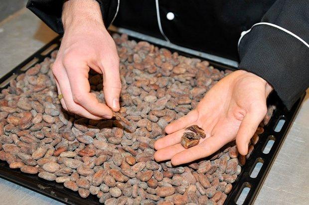 Selekcja ziaren kakao
