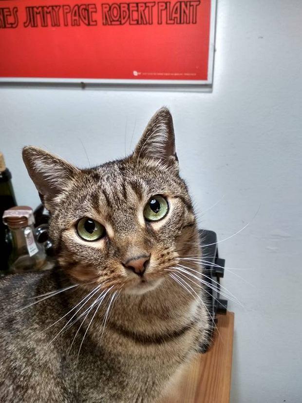 Zdjęcie numer 42 w galerii - Karmel, Daktyl, Kapitan Benny, Ptyś, Wiesław... Kochane i piękne - oto Wasze koty [GALERIA NA DZIEŃ KOTA]
