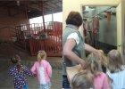 Przedszkolanki zabrały dzieci do rzeźni. Świnie czekające na ubój, mięso na haku, no i kiełbaski
