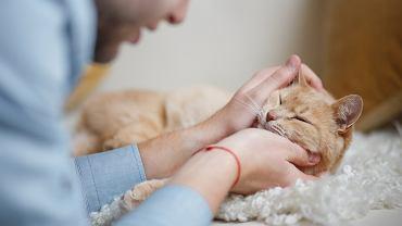 Kontakt ze zwierzętami domowymi może być niebezpieczny