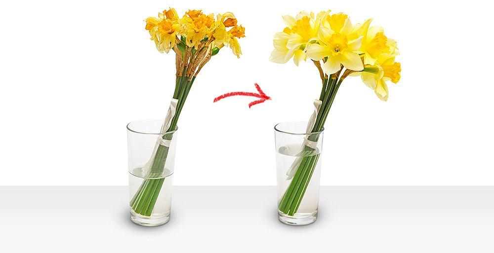 Aby kwiaty dłużej zachowały świeżość, należy je umieścić w dużym i czystym naczyniu.