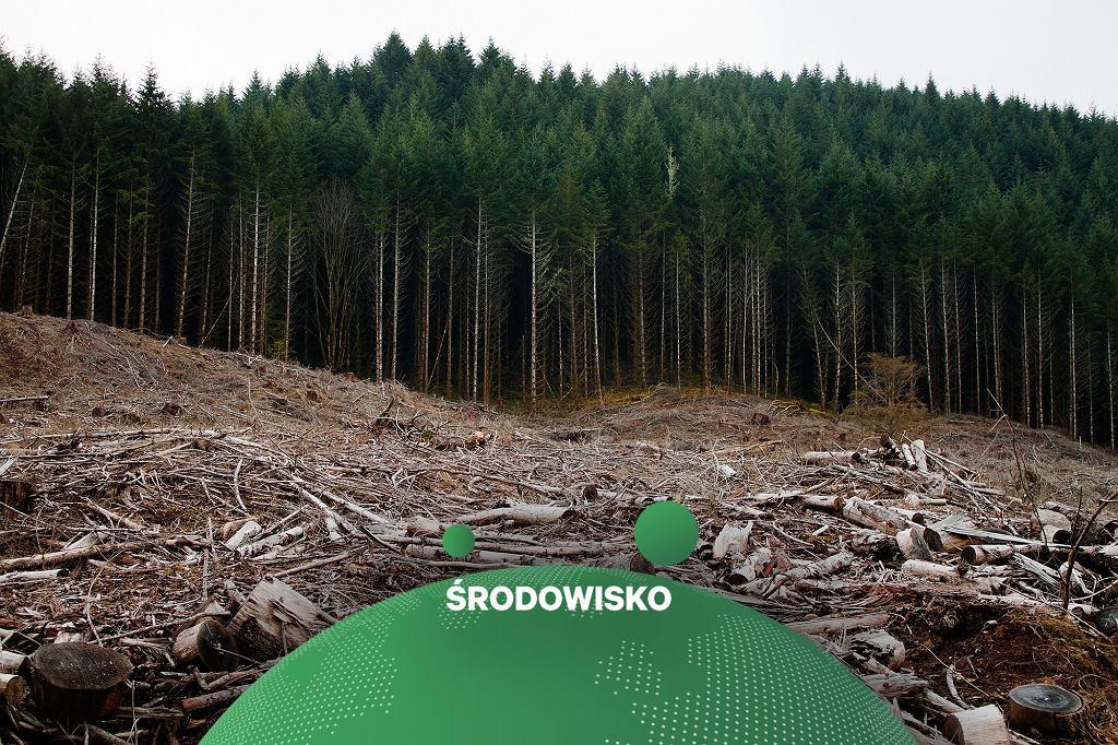 Nielegalne wycinki drzew w Rumunii