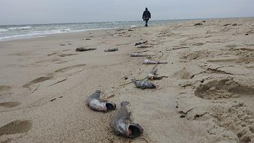 Motele wyrzucone na brzeg
